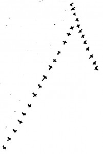 Henry David Thoreau's drawing of geese, November 23, 1853