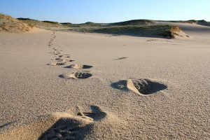 Cape Sand-walking