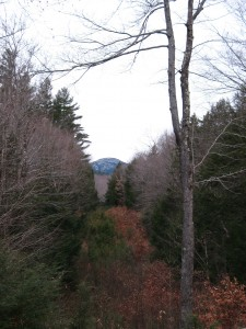 Tree-framed Cardigan Mountain - heartland