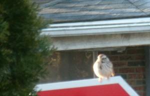 sparrowsit