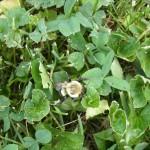 Last of Bee