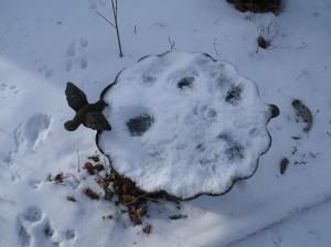 English Sparrow Snow Baths