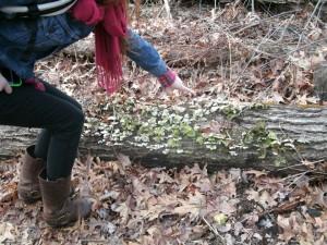 Green Fungi en Route
