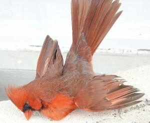 crucifiedbird