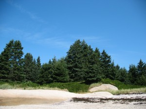 New Trees above the cove at Wreck Island