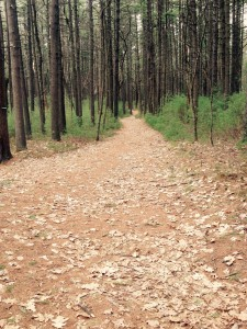 A way through the pines