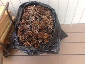 Here they are - looking a bit like an odd hobbit - a bagful of pine cones.