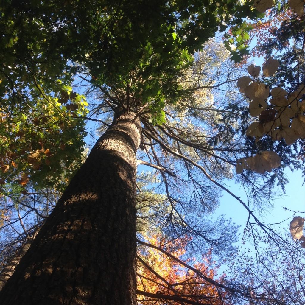Trees aspire