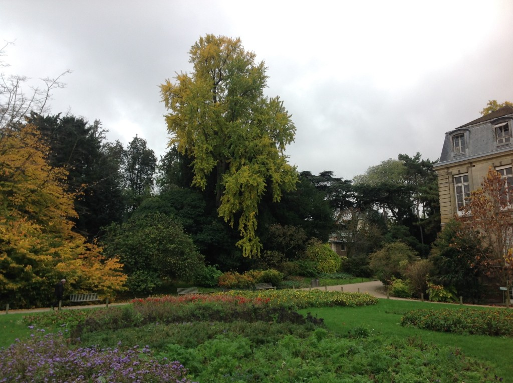A love for trees and gardens