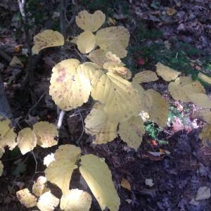 November forest light detail