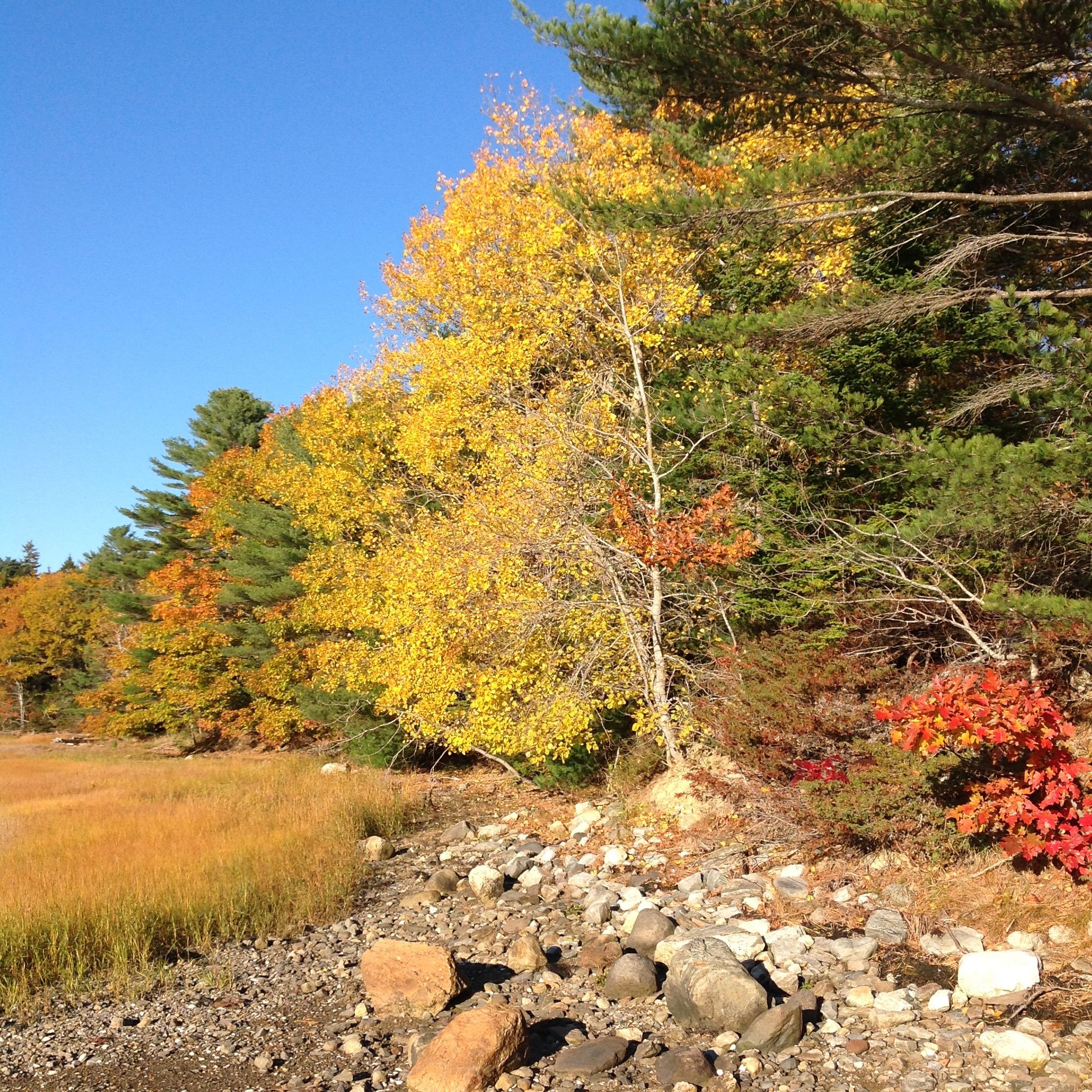 And, of course, fall's painting.