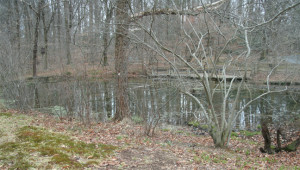 Pond in front of the Tyler Walden house